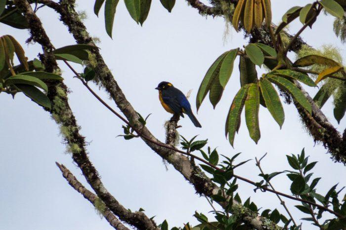 Nariño la Puerta del Amazonas – Plan 6 Días 5 Noches