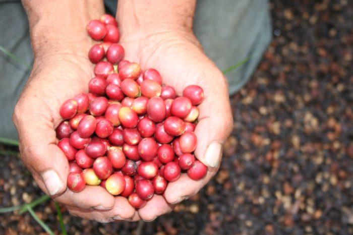 Nariño Aromas y Sabores del Mejor Café – Plan 5 Días 4 Noches